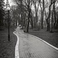 Извилистая даль. :: Андрий Майковский