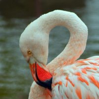 Белый фламинго :: Марина Богданова
