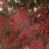 Между двух аллеек.. меж зимой и осенью :: Марина Щуцких