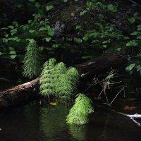Комариное озеро :: sv.kaschuk