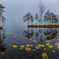 Осенние листья кувшинок :: Фёдор. Лашков