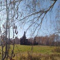 Осень в Новосибирской области :: Наталья