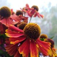 Осенние цветы :: Наталья