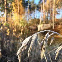 Мороз и солнце :: Виктория Левина