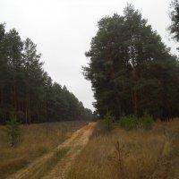 Хмурое утро в лесу :: Галина