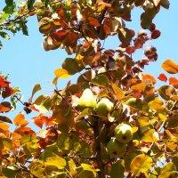 Осень на даче в солнечный день :: татьяна