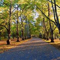 Осенний парк в Тойла- Ору :: Marina Pavlova