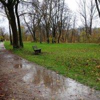 Дождливый ноябрь. Полинявшая осень.... :: Galina Dzubina