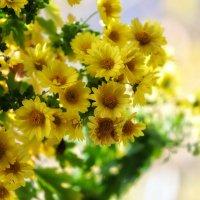 Осенние цветы :: Алексей Поляков