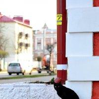 Черная кошка :: Сергей Землянский