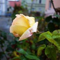 Грустят о лете поздние цветы... :: Galina Dzubina