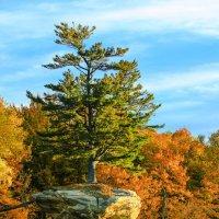 И на скалах растут деревья... :: Алена Торопов
