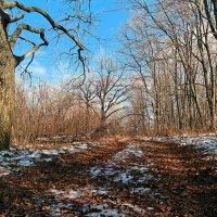 Зимы ждала, ждала природа... :: Андрей Заломленков