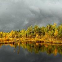 Ленинградский осенний лес 2 :: Виктория Левина
