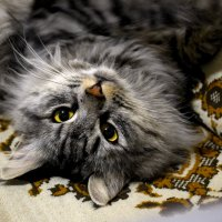 Мой котэ - Баpселон :: Анастасия Фомина