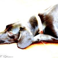 Dog :: Олег CHE