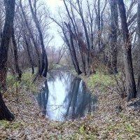 Лесное озеро :: Александр Алексеев