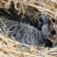 Кошки :: Валерьян