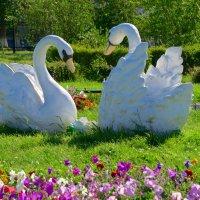 Лебеди в парке :: Вера Щукина