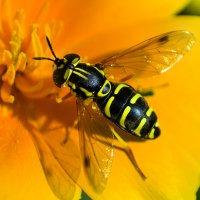 Жёлтая на жёлтом :: Елена Сохарева
