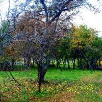 Начало ноября в яблоневым саду. :: Владимир Драгунский