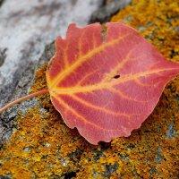 Осенний лист :: Dr. Olver