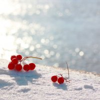 А далее - зима... :: Наталья Казанцева