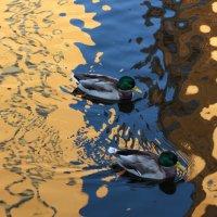Утки в отражении осени... :: Марина Павлова