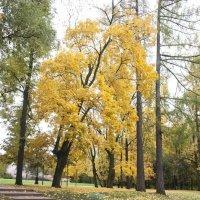 Царицино, парк осенью :: Вячеслав