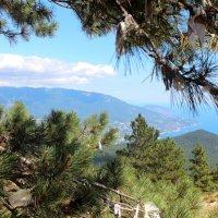Вид на Ялту с горы Ай-Петри :: Виктория Левина