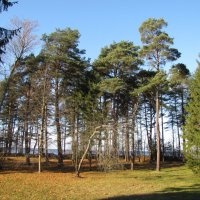Нарва-Йыэсуу, Эстония :: veera (veerra)