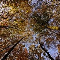 Осенний шатёр :: Alexander Andronik