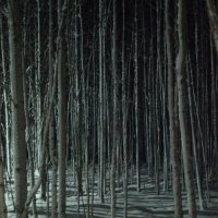 Тени спящего леса :: Наталья Жукова