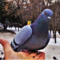 Красавчик или красавица :: Сергей
