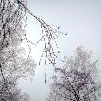 Ноябрьское утро :: Марина Шанаурова (Дедова)