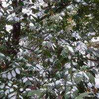 Первый снежок ... :: Galina194701
