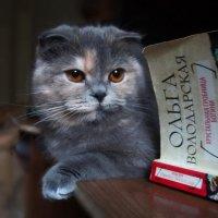 Книжка....кошка...и...тишина... :: Людмила Богданова (Скачко)