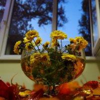 Хризантемы, в запахе вашем приютилась осень. :: Людмила Богданова (Скачко)