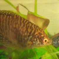 Как мило смотрятся целующиеся рыбки! :: Александр Куканов (Лотошинский)