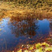 Осень в отражении :: Nina Yudicheva