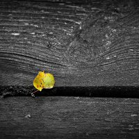 Скромная осень :: Лариса Валентинова