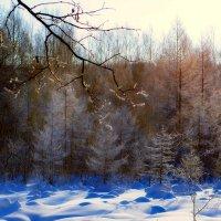 Прохлады леса теплота :: Владимир Куликов