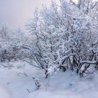 Снежный ноябрь :: Ольга