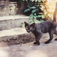 ..черный кот из-за угла... :: Лилия .
