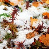 Разноцветье предзимья.. :: Андрей Заломленков