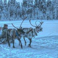 В гостях у Санта-Клауса! :: Натали Пам