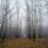Ноябрьский туман :: Ольга П