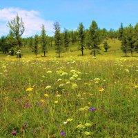 Цветочная поляна :: Сергей Чиняев
