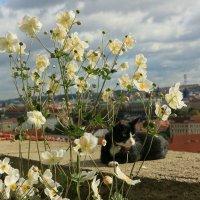 Котик в Праге :: Леся Сафронова