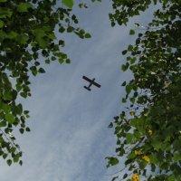 То ли комар, то ли самолёт... :: Vladimir Perminoff